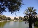 26-1-oasis.jpg